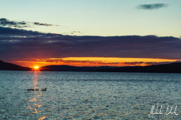 Storskrake i soluppgång