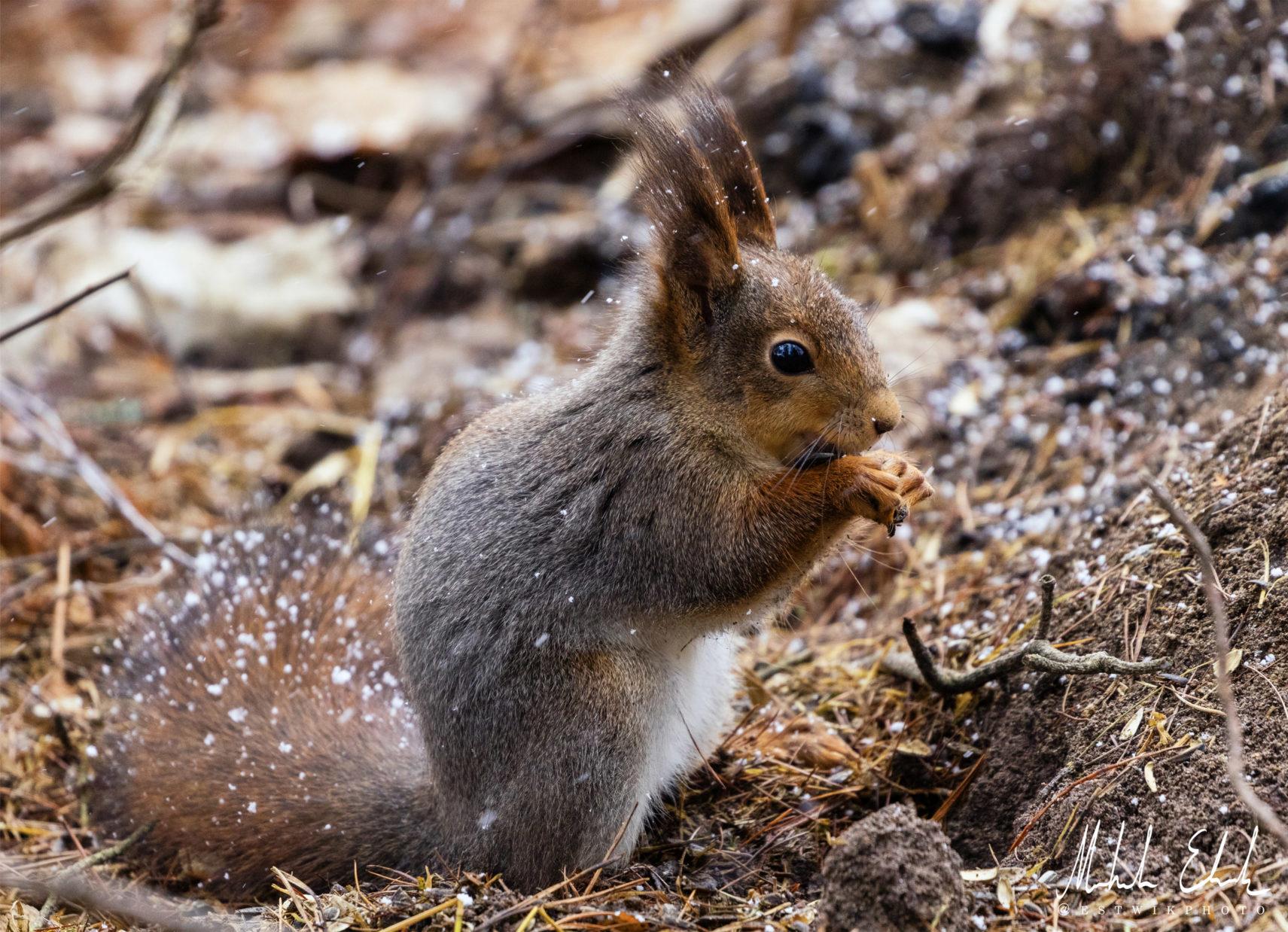 squirrel_015