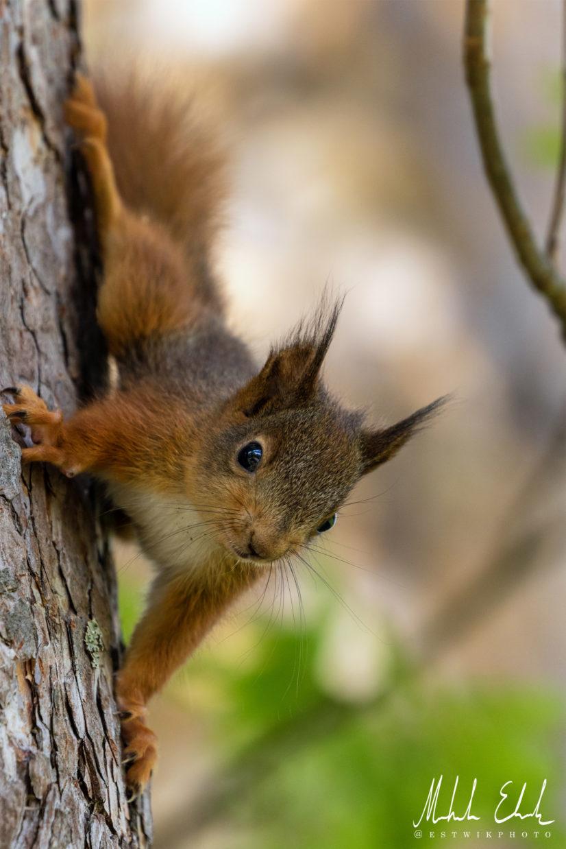 squirrel_020